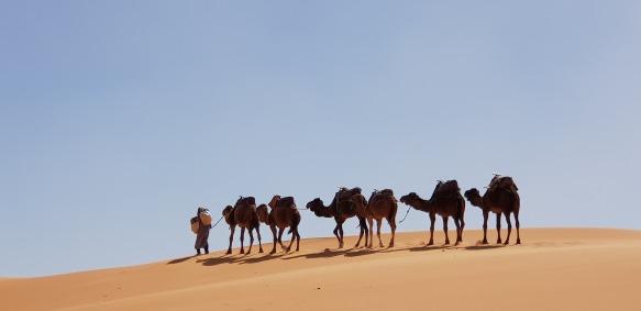 camelus-3199693_1920